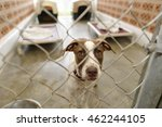 Shelter Dog Is Is A Beautiful...