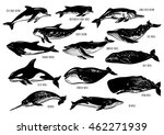set of hand drawn dolphins and... | Shutterstock . vector #462271939