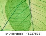 green decorative leaves... | Shutterstock . vector #46227538
