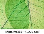 green decorative leaves... | Shutterstock . vector #46227538