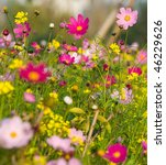 Colorful Wildflowers Blossoming ...