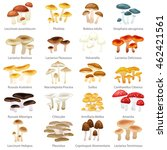 different type mushrooms for... | Shutterstock .eps vector #462421561