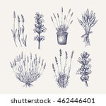 vector hand drawn lavender set... | Shutterstock .eps vector #462446401
