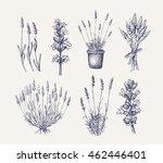 vector hand drawn lavender set... | Shutterstock .eps vector #462446401