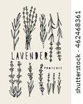vector hand drawn lavender set...   Shutterstock .eps vector #462468361