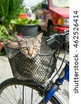 Cat Sitting In Basket On Bicycle