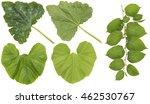 huge green  leaves of garden... | Shutterstock . vector #462530767