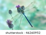 anax imperator  male  blue... | Shutterstock . vector #46260952
