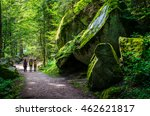 summer forest schwarzwald in... | Shutterstock . vector #462621817
