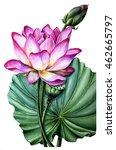 Pink Lotus Watercolor Painting...
