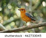 bird | Shutterstock . vector #462733045