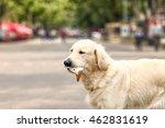 Cute Dog Eating Ice Cream On...