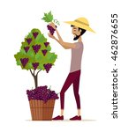 man picking grape during wine... | Shutterstock .eps vector #462876655