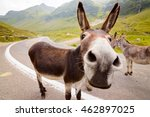 Funny Donkey On Transfagarasan...