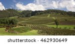 hunter valley winery australia   Shutterstock . vector #462930649