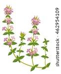 thymus | Shutterstock .eps vector #462954109