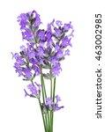 lavender flowers on light... | Shutterstock . vector #463002985