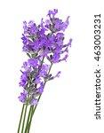 lavender flowers on light... | Shutterstock . vector #463003231