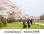 Iwate  Japan   April 16   View...