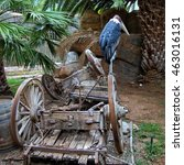 Small photo of Abandoned and Forsaken. Secretarybird with a big beak is sitting on a broken cart in an old park. Concepts of mood, feelings, support, helping, assistance, sadness, loneliness, abandonment.