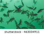 fish in water at natural... | Shutterstock . vector #463034911