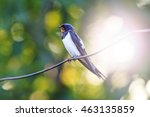 bird sitting on the wire with... | Shutterstock . vector #463135859