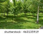 parks | Shutterstock . vector #463135919