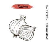 vector sketch of onions... | Shutterstock .eps vector #463166741