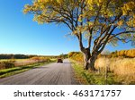 Elm Tree On The Road Side In...