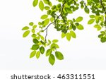 Tree Leaf On White Background