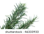 fresh rosemary on a white... | Shutterstock . vector #46333933