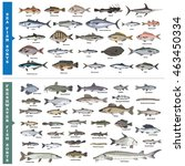 fish sorts and types. seawater... | Shutterstock .eps vector #463450334