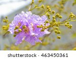 indianian flowers are in full... | Shutterstock . vector #463450361