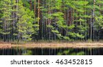 Northern Forest Landscape With...