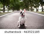 french bulldog on blur of road... | Shutterstock . vector #463521185