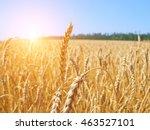 beautiful rural landscape.... | Shutterstock . vector #463527101