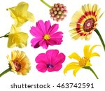 colorful flower isolated ... | Shutterstock . vector #463742591