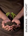 hands holdings a little green...   Shutterstock . vector #463744547