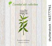 Lemon Verbena  Essential Oil...