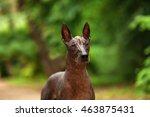 horizontal portrait of one dog... | Shutterstock . vector #463875431