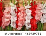 Beautiful Gladiolus Flowers On...