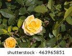 fragrant romantic beautiful... | Shutterstock . vector #463965851