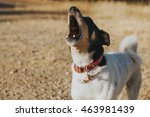 wine cellar dog howling and... | Shutterstock . vector #463981439