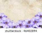 Background with purple clematis flowers and room for copy space. - stock photo