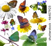 Isolated Butterflies And Plants