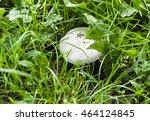 Great White Cap Mushroom In Th...