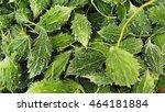 bitter gourd | Shutterstock . vector #464181884