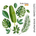 Vector Exotic Tropical Leaves ...