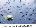 Beautiful White Water Lily In ...