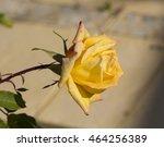 fragrant romantic beautiful... | Shutterstock . vector #464256389